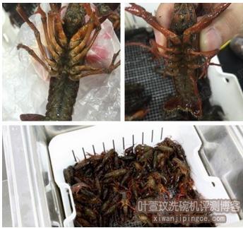 待清洗小龙虾